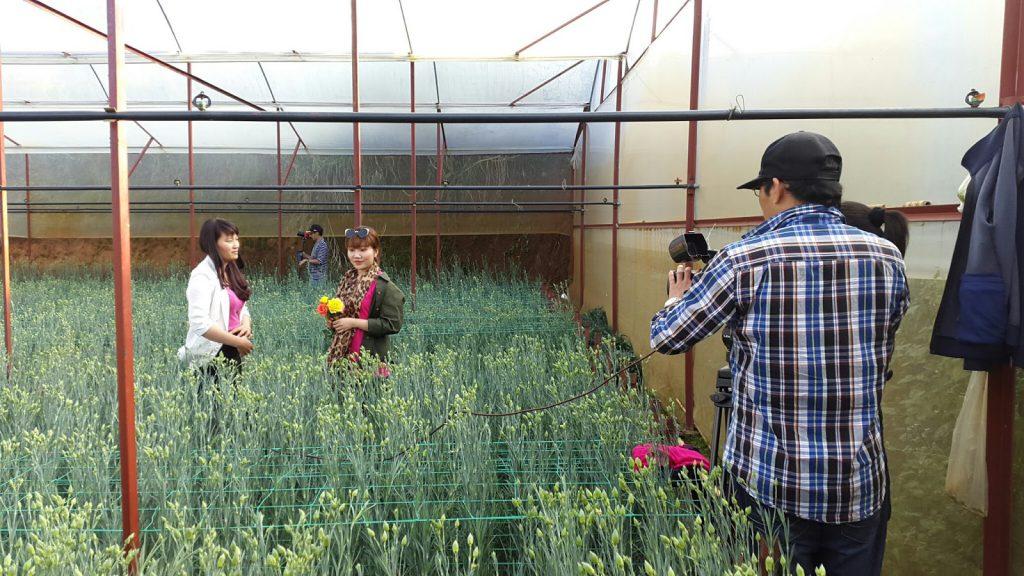 Hoa cẩm chướng Đà Lạt tại trang trại Hoa tươi Đà Lạt Tinh Hoa đang quay phim lên sóng HTVC