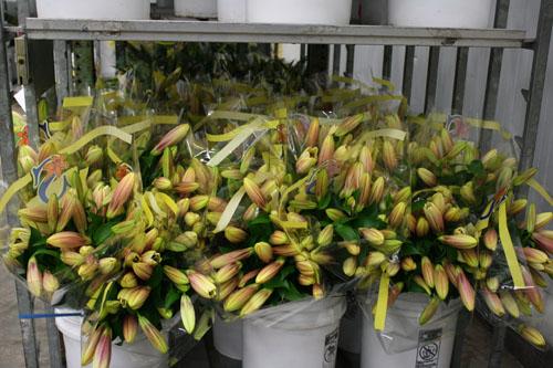 Kinh nghiệm bán hoa tết: Bảo quản, chăm sóc hoa đẹp, tươi lâu