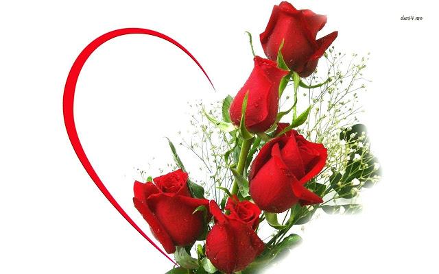 Hoa hồng luôn là biểu tượng của tình yêu