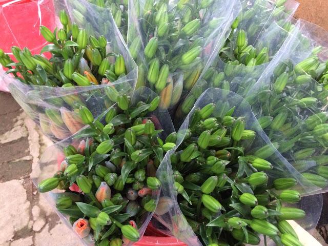 hoa-lily-vang-cam-gia-dac-biet-hoatuoidalat123