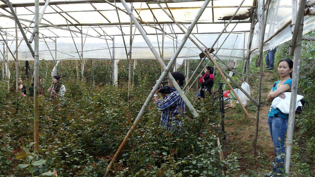 Hoa Hồng Đà Lạt tại trang trại Hoa tươi Đà Lạt Tinh Hoa đang quay phim lên sóng HTVC