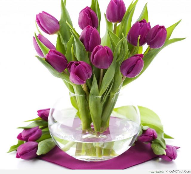 Kinh nghiệm bán hoa tươi: Chăm sóc hoa tulip