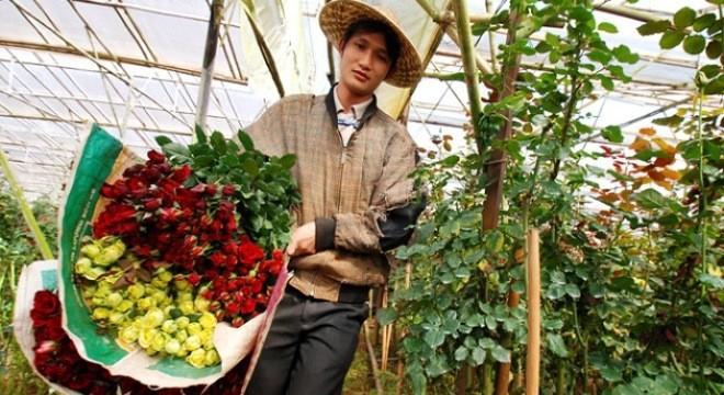 Kinh nghiệm bán hoa tết: Chăm sóc hoa hồng