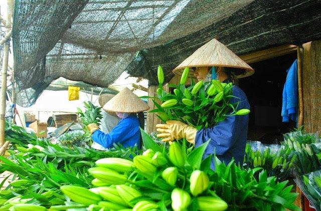 Công nhân đang phân loại hoa Ly