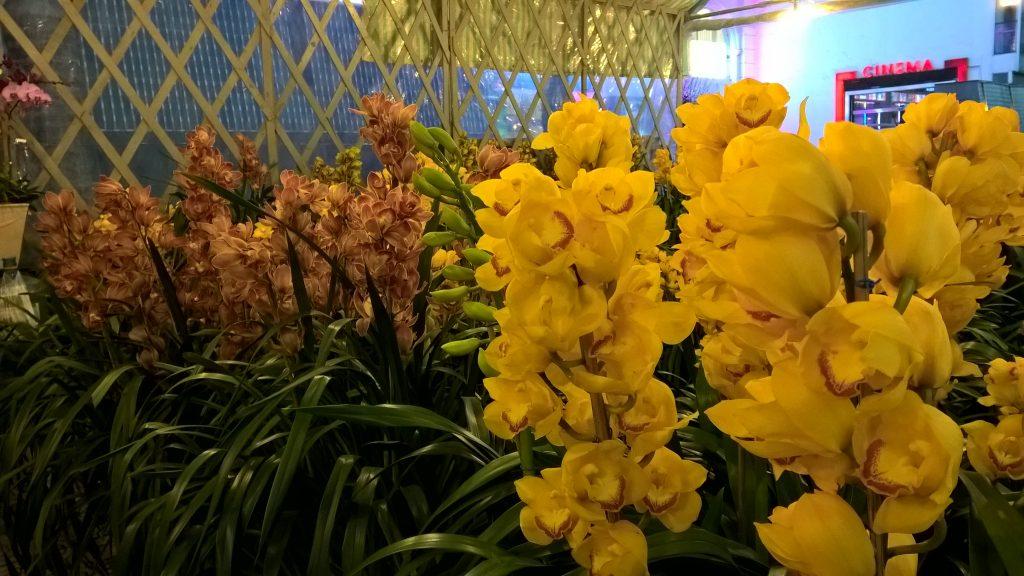 Địa lan vàng SJC Đà Lạt - Hoa tươi Đà Lạt